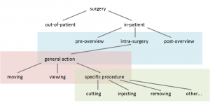 surgery-hierarchy2